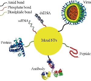 D:\xwu\Nano Biomedicine and Engineering\Articles for production\排版\8(4)\NBE-2016-0025.R1 Faramarzi, Mohammad Ali\fig\mhyt3.jpg